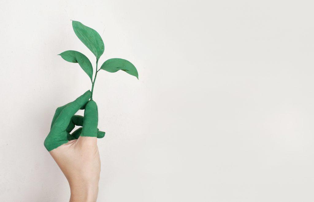 halbgrün gemalene Hand mit junge Pflanze